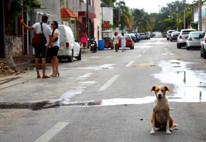 El comportamiento de los perros es regido principalmente por su entorno humano. (Daniel Pacheco/SIPSE)