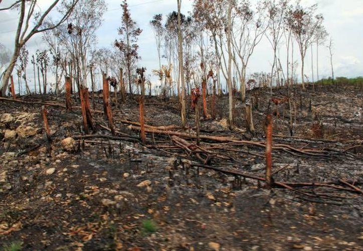 Combatieron incendios y conatos, un total de 200 bomberos de la SSP distribuidos en 35 puntos de la entidad. (Archivo/Milenio Novedades)