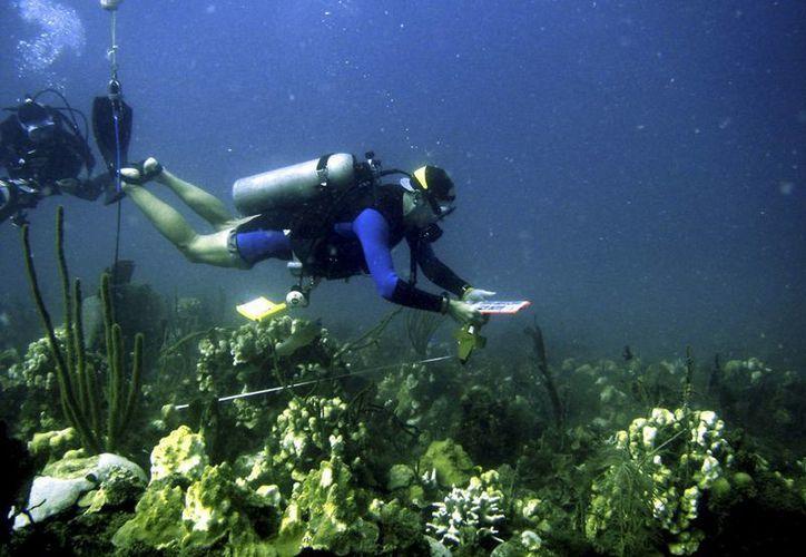 Por los cambios climáticos es posible que algunos corales desaparezcan y que otro tipo de organismos, como las algas, ocupen su lugar. (Agencias)