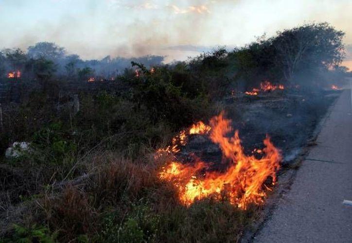 En el Estado se registran decenas de incendios semanales generados por la mano del hombre. (Archivo/SIPSE)