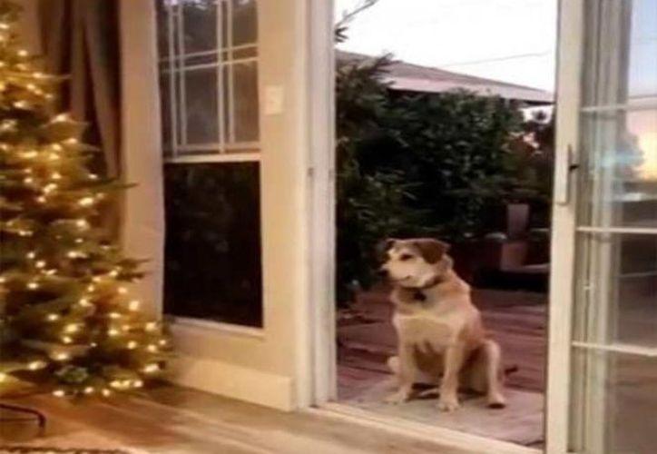 El perro demostró que tiene la misma inocencia que la de un niño. (Foto: Captura del video)