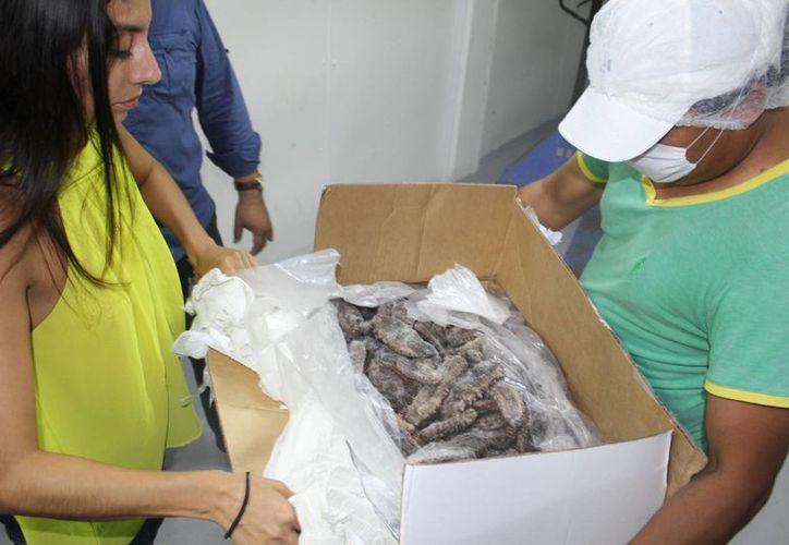 Autoridades sospechaban que el pepino que iba a China era ilegal. (Gerardo Keb/Milenio Novedades)