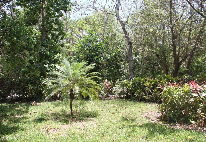 El Jardín Botánico Alfredo Barrera Marín, se ubica en Puerto Morelos. (Tomás Álvarez/SIPSE)