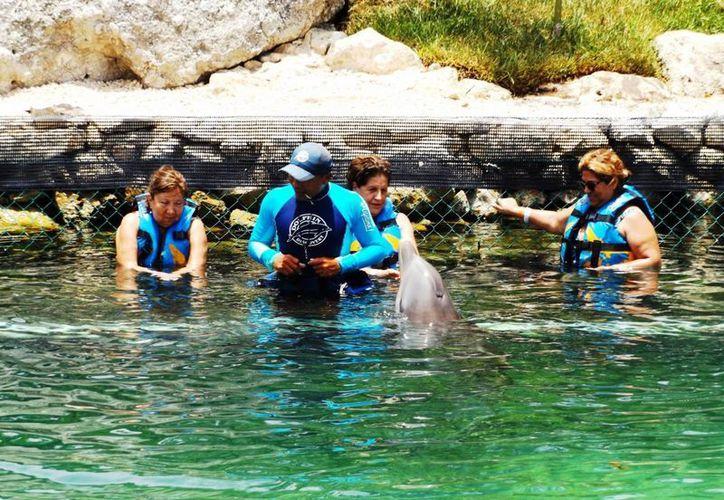 Defensores de los animales proponen a los delfinarios de Q. Roo reinsertar a sus delfines en su hábitat. (Daniel Pacheco/SIPSE)