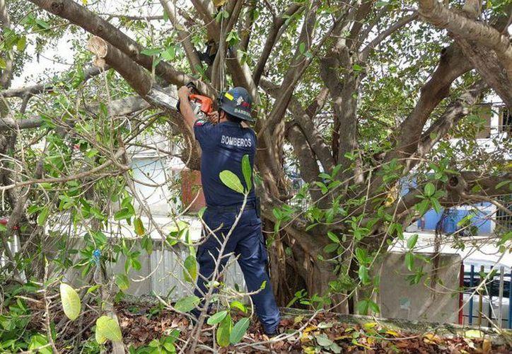 Bomberos cortan ramas de árboles en los planteles educativos de Playa del Carmen. (Daniel Pacheco/SIPSE)