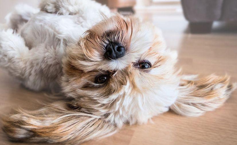 Los animales son fieles compañeros capaces de darnos esa sonrisa cuando más lo necesitamos, ese amigo fiel que se sentará junto a nosotros cuando nos sintamos solos. [Foto: Pixabay]
