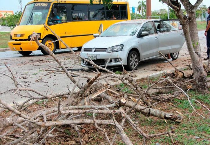 Un árbol cayó sobre un vehículo en la calle 60 norte de Mérida. El conductor salió ileso. (Aldo Pallota/SIPSE)