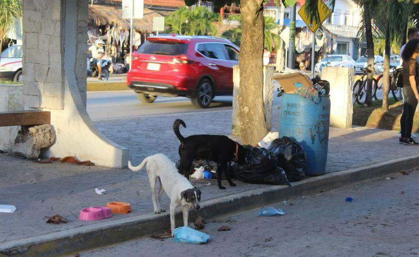 Se realizaron campañas para mantener el control de los animales. (Sara Cauich/SIPSE)