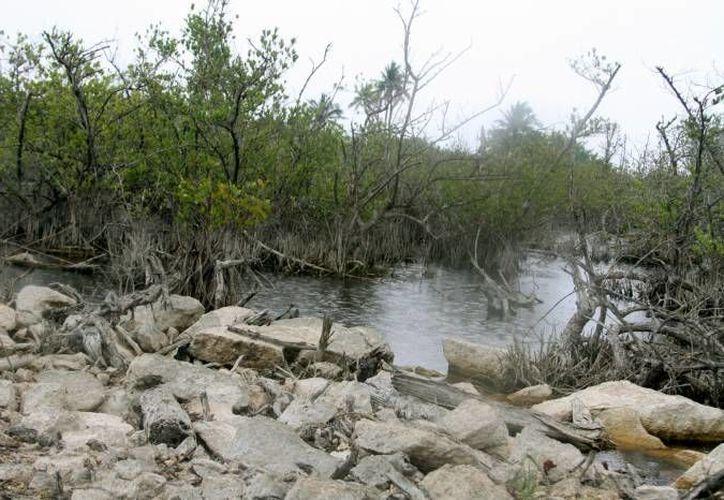 Los recursos económicos serán utilizados para el monitoreo del agua en la zona de humedales. (Archivo/SIPSE)