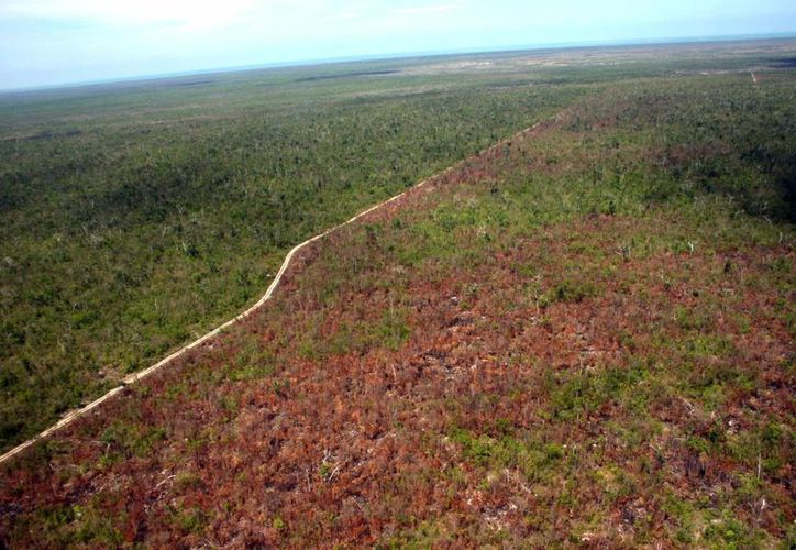 Los cultivos del campo son los más afectados debido a la ausencia de lluvias. (Tomás Álvarez/SIPSE)