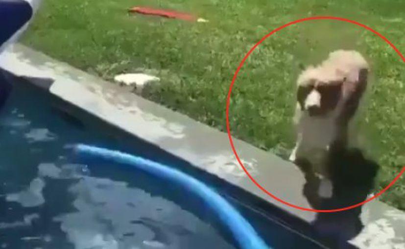 El can se asustó ante la posibilidad de que su dueño se esté ahogando. (Foto: The Huffington Post)