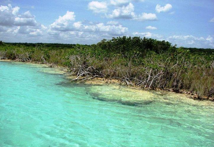 Buscan delimitar el área de los estromatolitos para protegerlos. (Javier Ortiz/SIPSE)