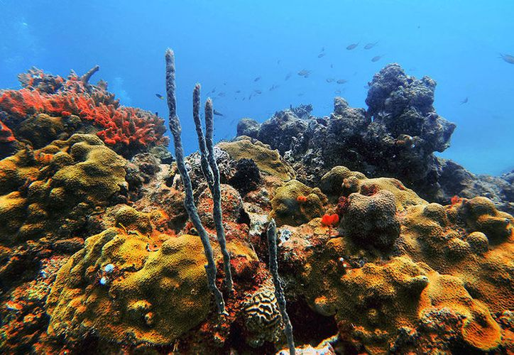 El encallamiento del buque Antares causó daños a nueve especies de coral en la zona. (Internet/Contexto)