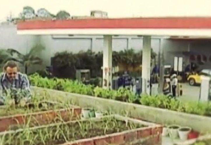 Las personas que llegan a la gasolinera no sólo abastecen de combustible sus vehículos sino que también pueden comprar vegetales y verduras. (Captura de pantalla)