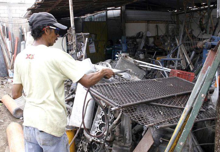 Apuestan a la expo e importacion de chatara (Foto: SIPSE)