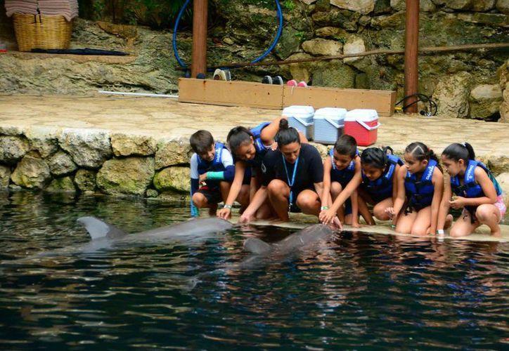 En Delphinus Riviera Maya y Delphinus Puerto Morelos, el programa educativo consta de tres pasos. (Redacción/SIPSE)