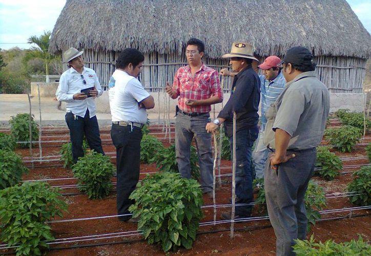 Los campesinos continúan esperando que los empresarios den la cara. (Carlos Yabur/SIPSE)