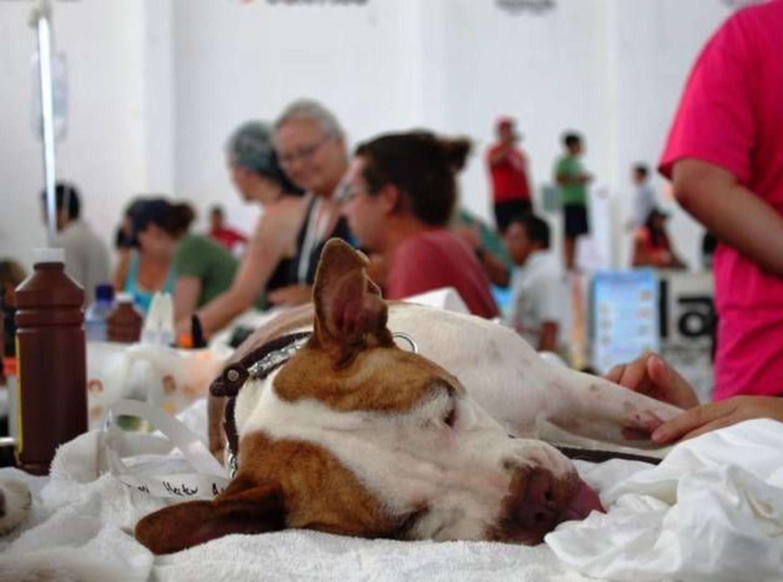 micción frecuente de enfermedad renal del perro