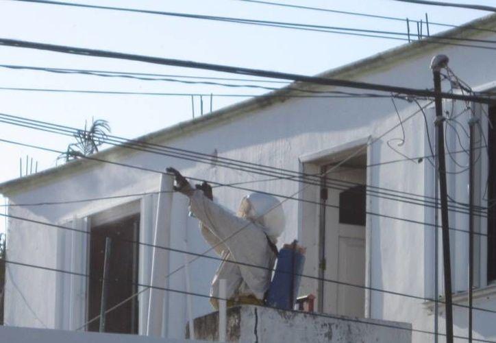 El personal de bomberos destruye 60 enjambres mensualmente en la ciudad de Chetumal. (Harold Alcocer/SIPSE)