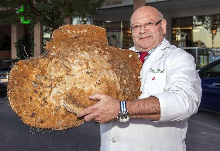 Luis Conde, farmacéutico de profesión y miembro de la Sociedad Micológica de Salamanca, con la seta de más de 12 kilos y 65 centímetros de diámetro, que encontró en el sur de la provincia de Salamanca, en España. (EFE)