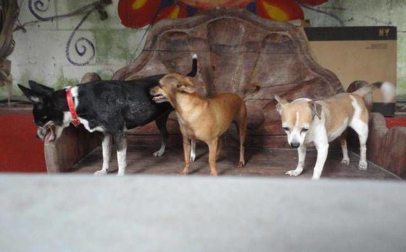 Mascotas ya pueden vacacionar con sus due os en canc n y - Novedades para mascotas ...