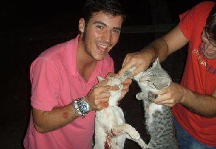 Serán castigados aquellos que intencionalmente realicen actos de crueldad contra animales domésticos. (Internet)