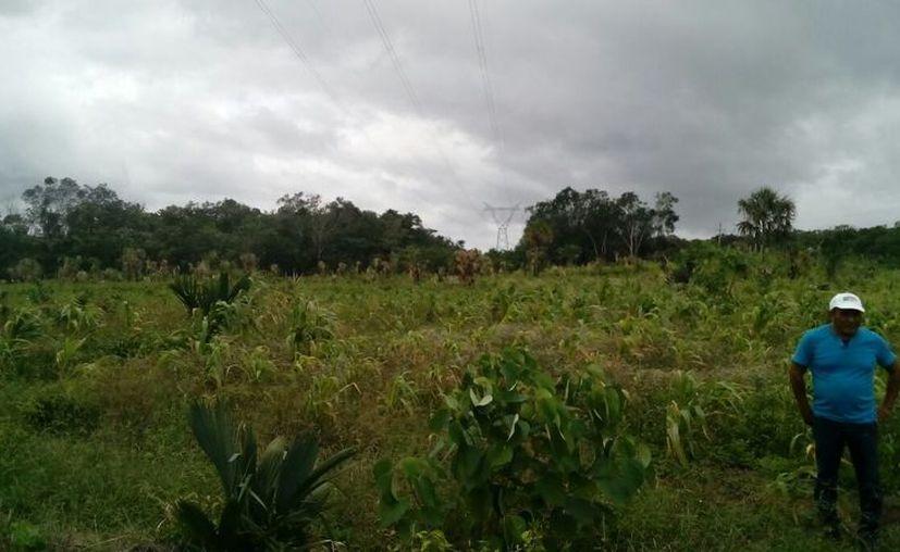 El personal de la Dirección de Desarrollo Económico municipal realizó un recorrido en las zonas afectadas por la tormenta. (Jesús Caamal/SIPSE)