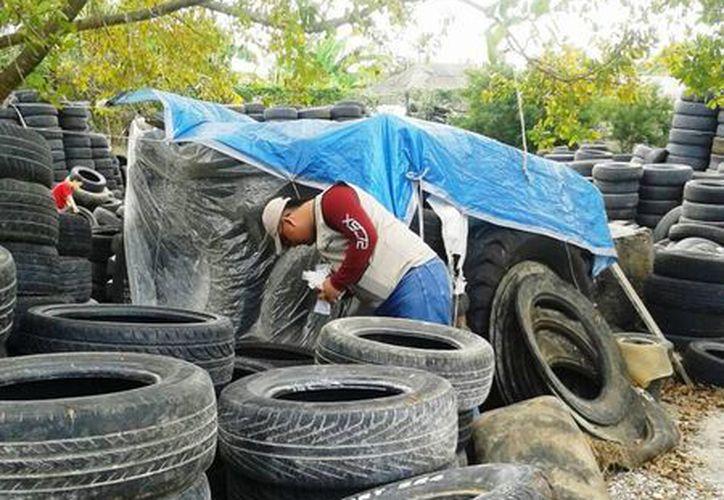 Las llantas usadas y abandonadas representan un potencial peligro para la reproducción de mosquitos. (Javier Ortiz/SIPSE)