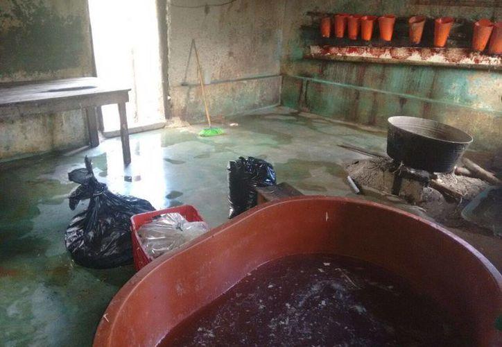Autoridades municipales clausuraron ayer un matadero clandestino en el poblado Macario Gómez.  (Rossy López/SIPSE)