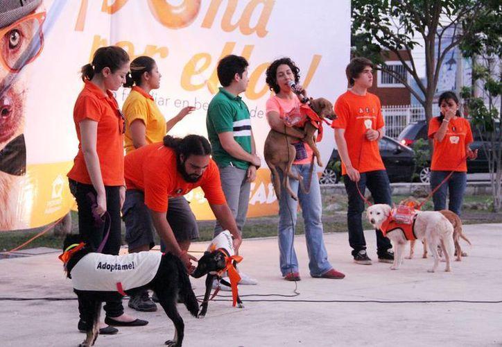 """Durante la actividad """"desfilaron"""" varios perros para su adopción. (Milenio Novedades)"""