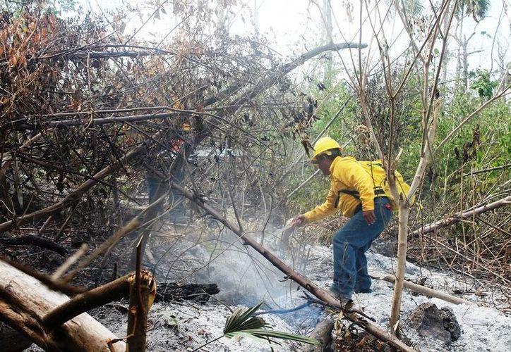 En 2013 la Conafor presentó ante la Procuraduría  Federal de Protección al Ambiente (Profepa) 14 denuncias por incendios provocados. (Gerardo Amaro/SIPSE)