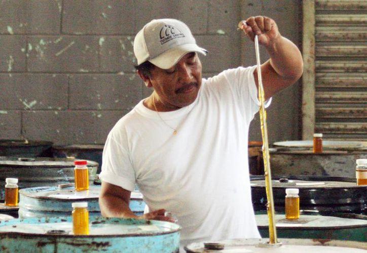 La miel producida en Yucatán tiene en Europa su principal mercado. Imagen de un apicultor que revisa la calidad de la miel para su exportación. (Milenio Novedades)