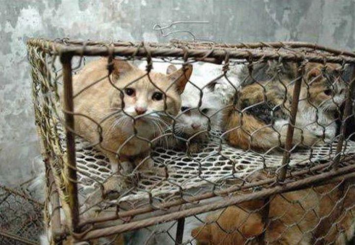 En China cada año cerca de 2 millones de perros y gatos son sacrificados para obtener su pelo. (abcblogs.abc.es)