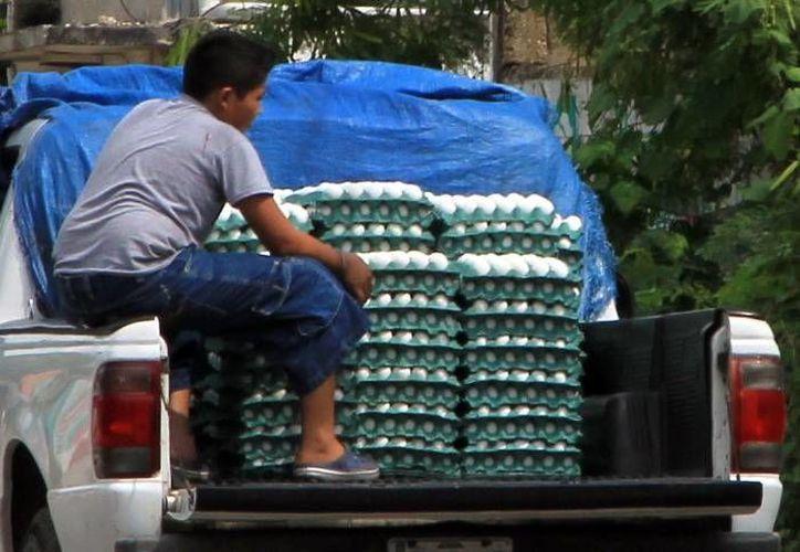 Considera la Profeco que Yucatán tiene autonomía en la producción de huevo. (Milenio Novedades)