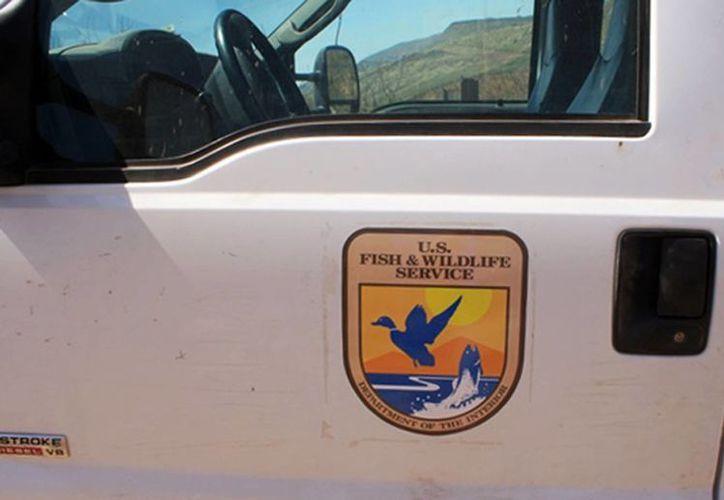 Los traficantes pretendían que el vehículo pasara desapercibido con el escudo del Servicio de Pesca y Fauna Silvestre de EU. (AP)