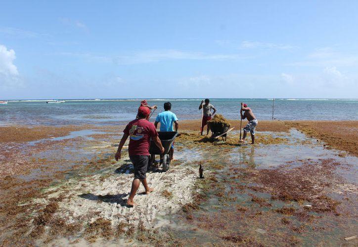 Socios y chafiretes trabajan para lograr que las playas estén en mores condiciones para recibir a los visitantes que llegarán en las vacaciones de Semana Santa. (Carlos Castillo/SIPSE)