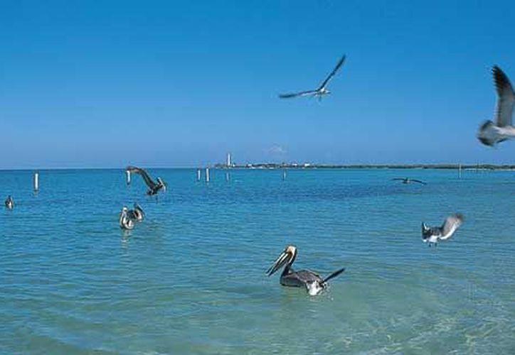 En la isla de Holbox promocionaran excursiones para ver el tiburon ballena. (mexicodesconocido.com.mx)