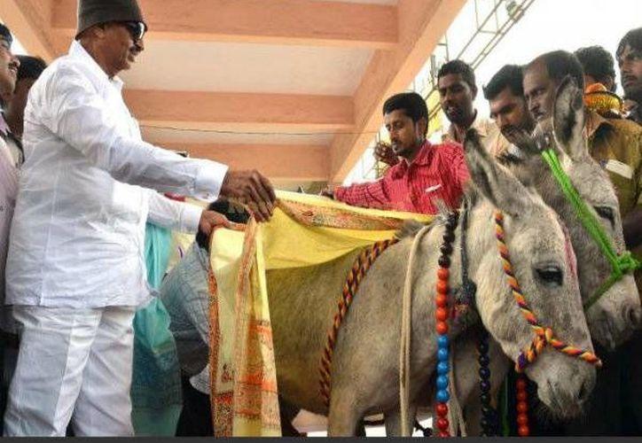 Los testigos de la insólita premiación arrojaron pétalos de rosa y arroparon a los animales. (oneindia.com)