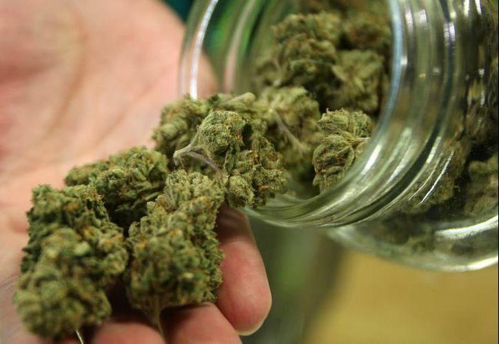 Se crearán dos nuevas infracciones penales para combatir la venta de cannabis a menores de edad. (Ayayay.tv)