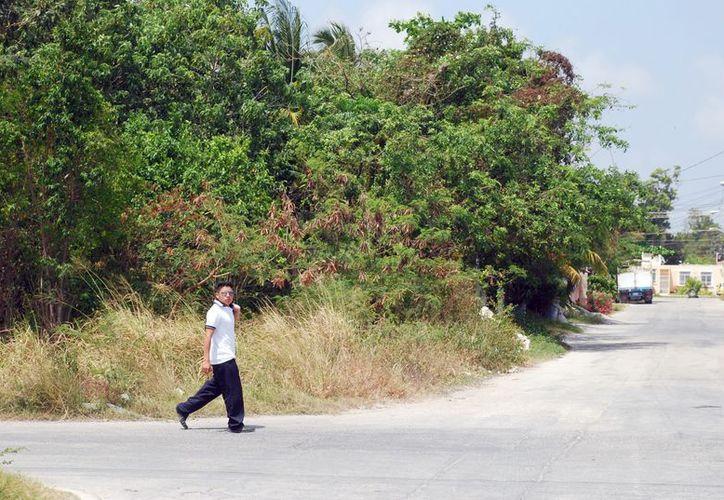 Una superficie de 815.71 hectáreas está incluida en el polígono del centro poblacional de Puerto Morelos. (Tomás Álvarez/SIPSE)