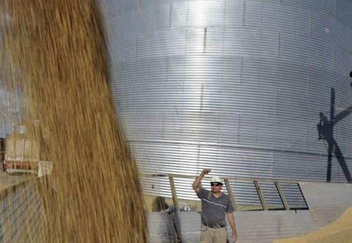 La agricultura es uno de los motores principales de la economía paraguaya. (Agencias)