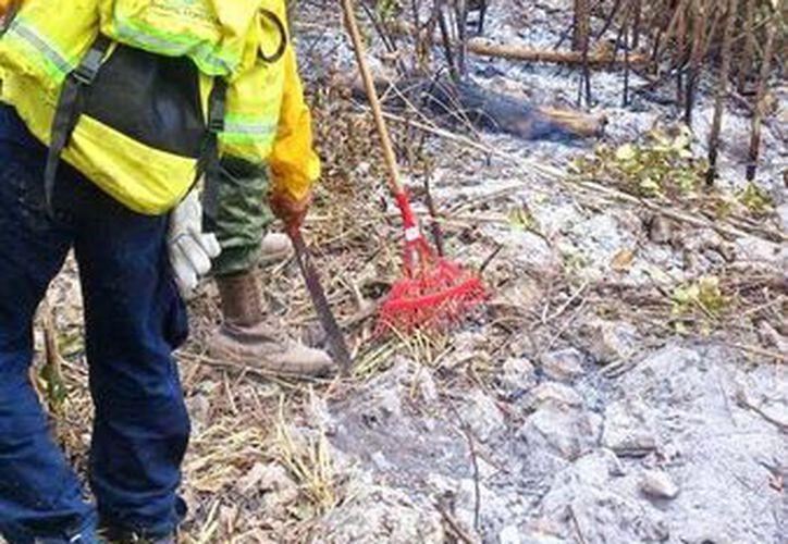 Dos nuevos incendios en el sur del Estado ya consumieron 45 hectáreas. ( Javier Ortiz/SISE)