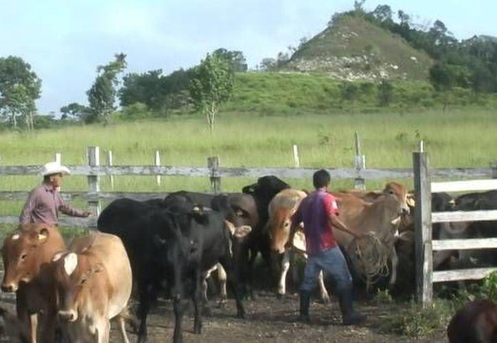 Hasta el momento no se tienen ningún rancho en cuarentena y solo mantienen la vigilancia. (Juan Rodríguez/ SIPSE)