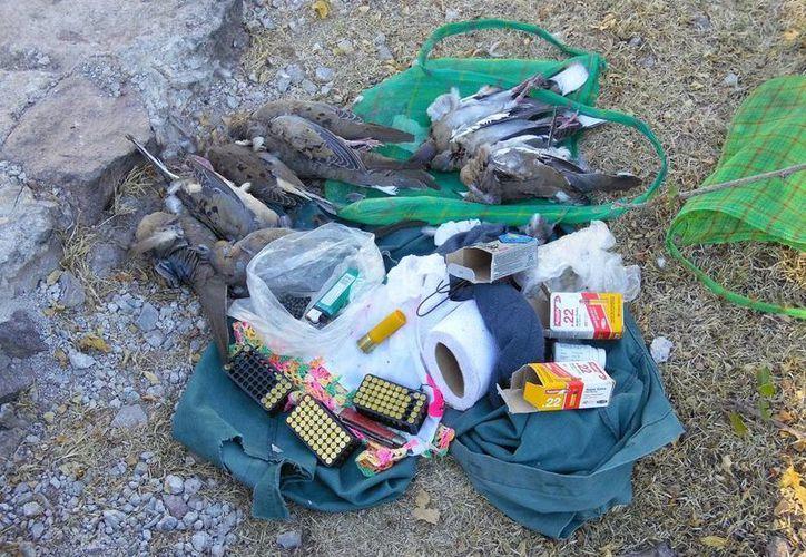 En un morral encontraron nueve palomas muertas, seis de ellas de la especie denominada Huilota y tres de alas blancas; de igual forma se encontraron balas, cartuchos y perdigones útiles. (@PROFEPA)