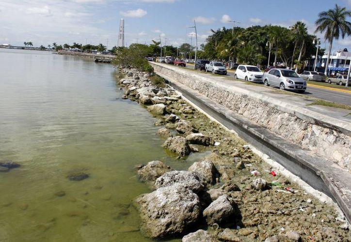 Jóvenes de nivel secundaria y preparatoria participarán en esta labor que tiene como único objetivo evitar la contaminación de las aguas costeras. (Enrique Mena/SIPSE)