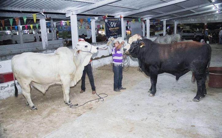 La XXVI edición de la Expo Feria Ganadera, Agricultura, Cultural e Industrial de Buctzotz ofrece actividades culturales y artísticas. (Milenio Novedades)