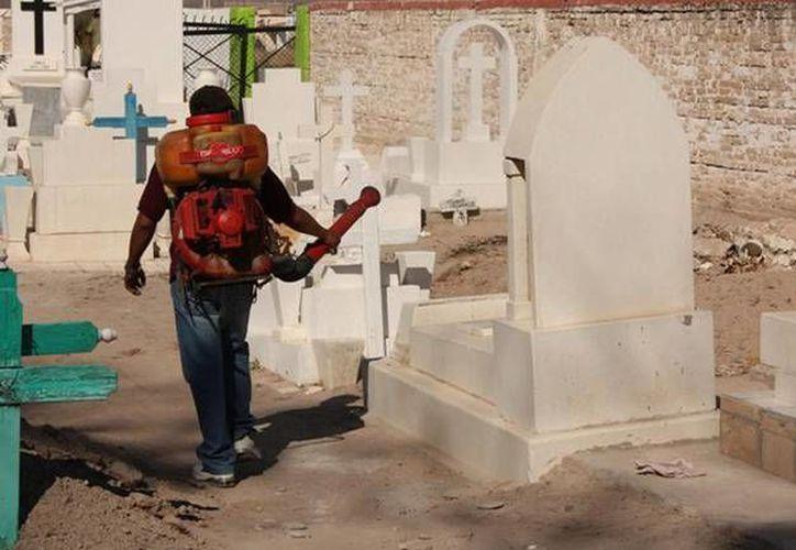 Fumigación, limpieza de áreas verdes y remozamiento de tumbas, son las labores que se realizan en el cementerio.  (Redacción/SIPSE)