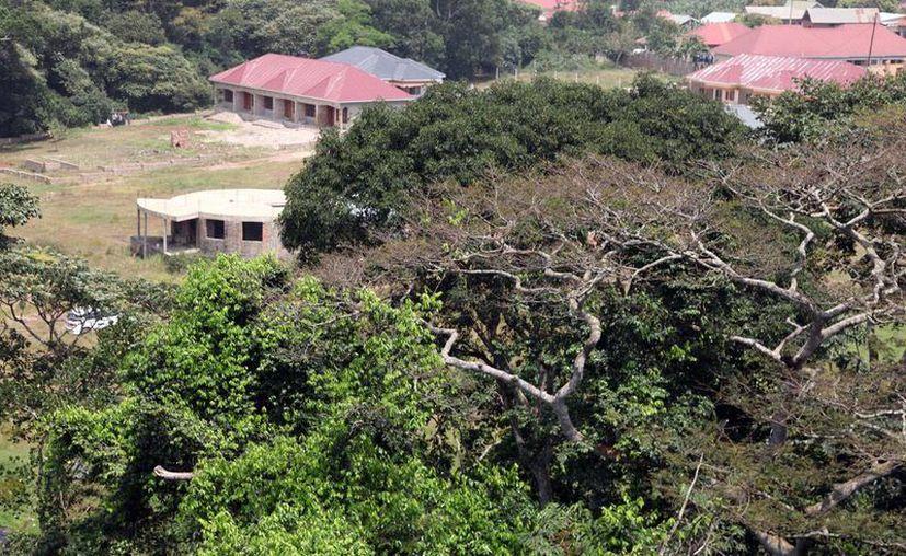 Imagen del bosque tropical del Zika, en Uganda, donde surgió por primera vez esta enfermedad. El país reporta ahora 658 muertos en los últimos seis meses, a causa de un brote de malaria, que también se transmite por picadura de moscos. (Archivo/AP)