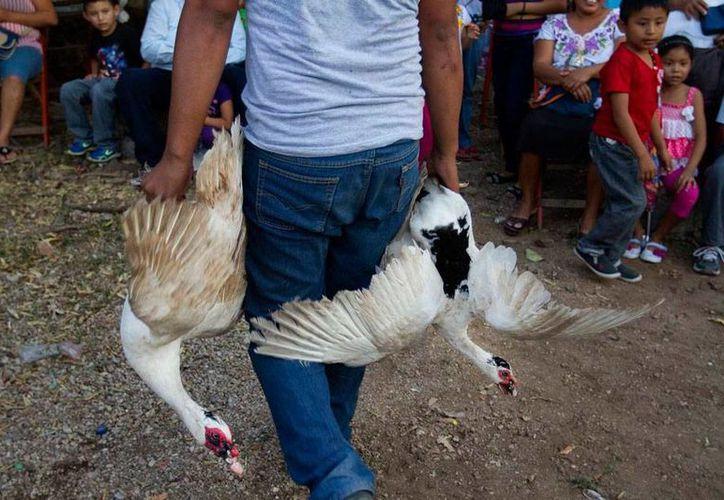En el Kots Kaal Pato, decenas de aves van directamente al matadero, como parte de una 'tradición', en Citilcum, Izamal, Yucatán. (Hugo Borges/vice)