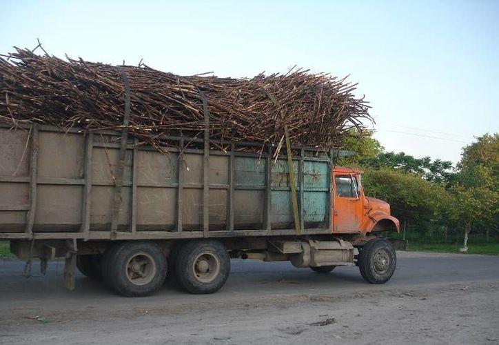 Según los datos de la UNC, en la zafra 2012–2013 se industrializarán 790 mil hectáreas de cultivo; poco más de 54 millones de toneladas de caña serán molidas y se producirán poco más de seis millones de toneladas de azúcar. (Edgardo Rodríguez/SIPSE)